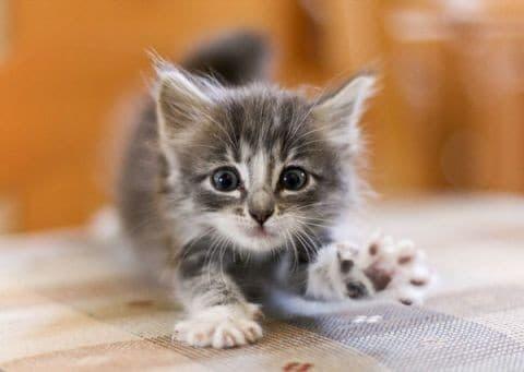 Удобная кормушка для кота своими руками