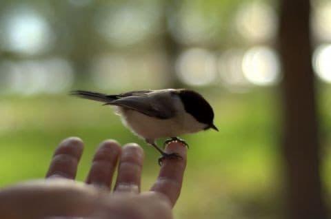 Идеи для поделки: простая кормушка для птиц своими руками