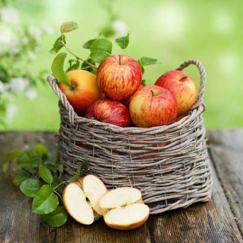 Яблочный спас. Способы переработки яблок