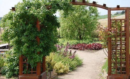 Арки и перголы для сада