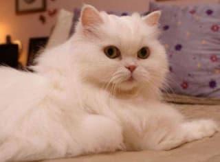 Как сделать домик для кота: легко и незатратно