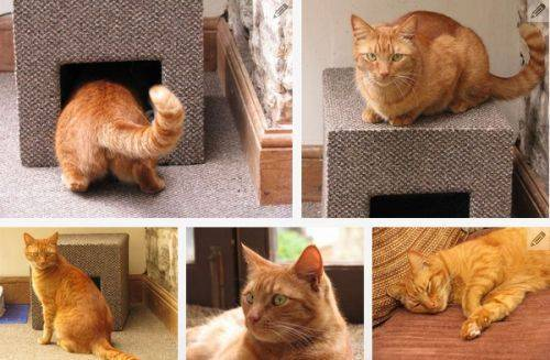 b2ap3_thumbnail_cat-house-box.jpg