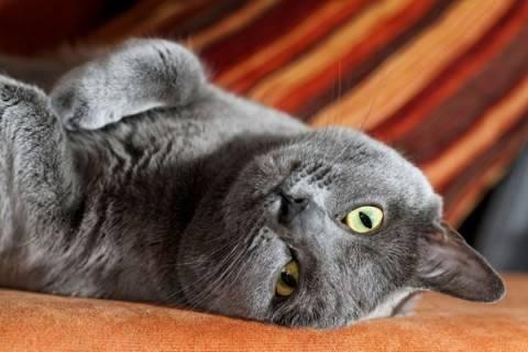 Идея для любителей животных - лежанки для кошек. Фото самых удобных вариантов